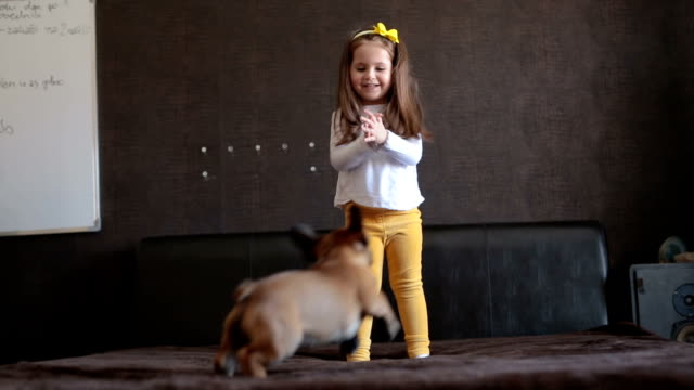 toddler playing with her french puppy - pets stock videos & royalty-free footage