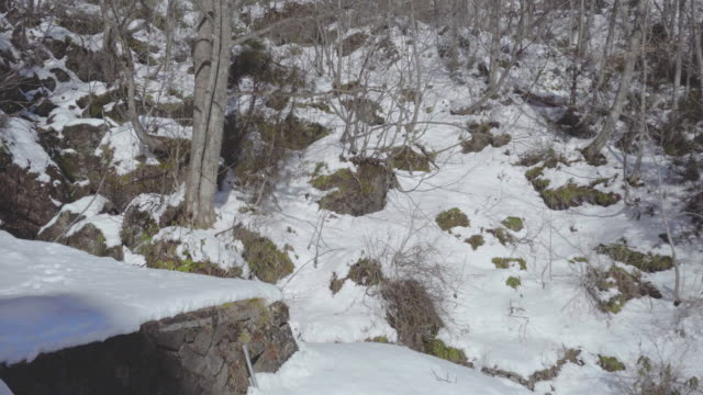 togakushi mountain in winter - shinto shrine stock videos & royalty-free footage
