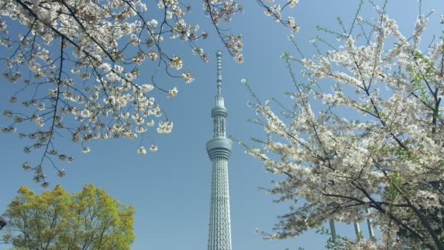 tokyo sky tree and cherry blossoms - 塔点の映像素材/bロール