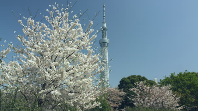tokyo sky tree and cherry blossoms - 10 o più secondi video stock e b–roll