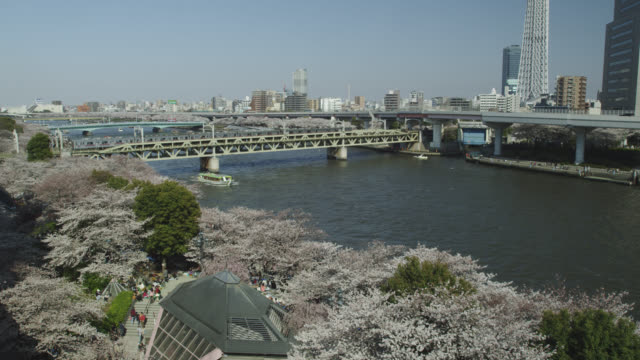 tokyo sky tree with cherry blossom - kanto region stock videos and b-roll footage