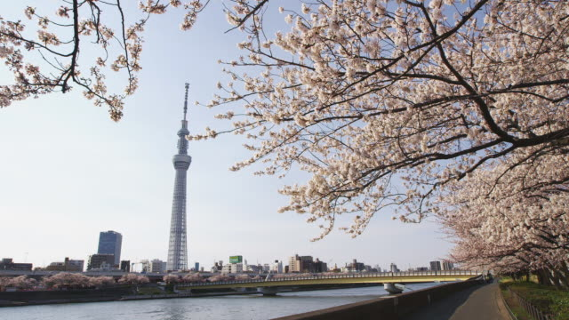 tokyo skytree tower and cherry blossoms in japan - kanto region stock videos and b-roll footage