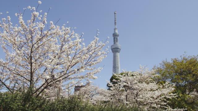 vídeos de stock, filmes e b-roll de tokyo skytree tower and cherry blossoms in japan - torre estrutura construída