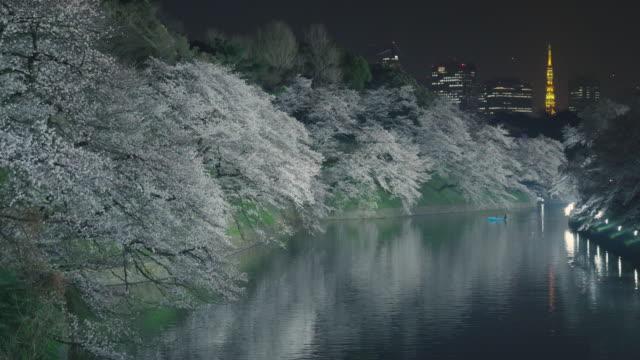 tokyo tower and chidorigafuchi cherry blossom light up - 運河点の映像素材/bロール