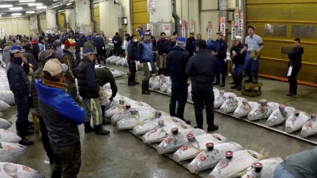 Tokyo's historic Tsukiji fish market held its final New Year auction Jan 5 and the highest bid of 3645 million yen was for a 405kilogram bluefin tuna...