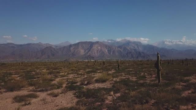 vidéos et rushes de tolar grande au cordillère des andes, argentinee - cactus