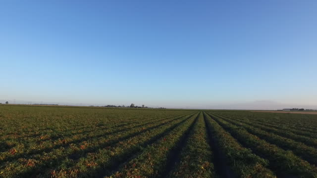 tomato field drone pov - wiese stock videos & royalty-free footage