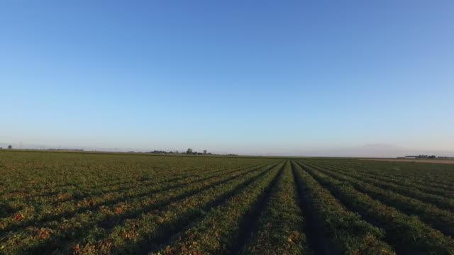vídeos y material grabado en eventos de stock de tomato field drone pov - wiese