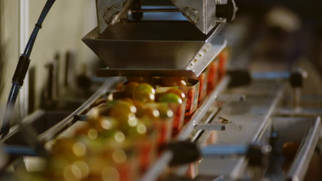 CU SELECTIVE FOCUS Tomato packing machine, filling boxes with tomatoes / Algarrobo, Malaga, Spain