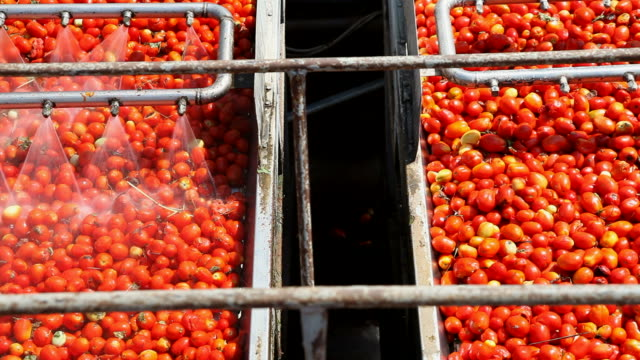 tomato sauce factory - tomato stock videos & royalty-free footage