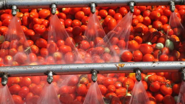 salsa di pomodoro fabbrica - salsa di pomodoro video stock e b–roll