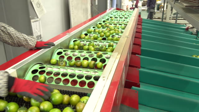 tomato sorting process in factory / busan, south korea - food processing plant stock videos & royalty-free footage