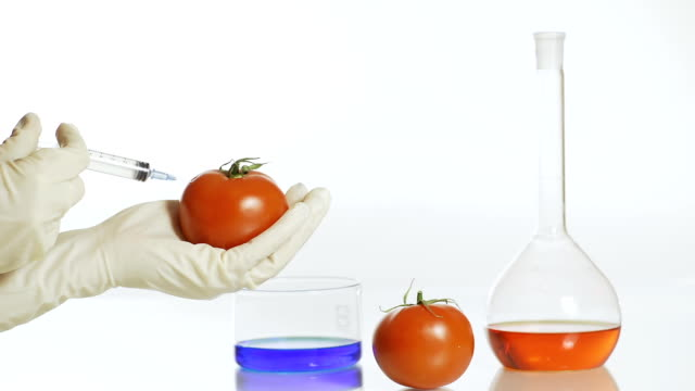 hd: gmo tomato - solutions stock videos & royalty-free footage