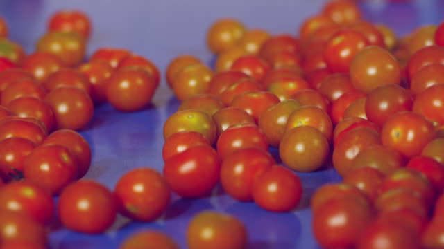 cu selective focus tomatoes on conveyor belt / algarrobo, malaga, spain - food processing plant stock videos and b-roll footage