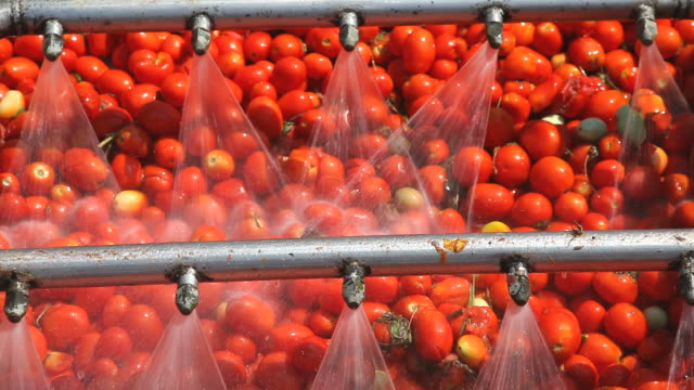 tomatoes - sauce stock videos & royalty-free footage