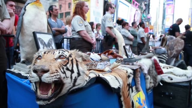 a ton of ivory confiscated from new york and philadelphia was crushed in times square to prevent elephant poaching and the illegal ivory trade new... - 象牙点の映像素材/bロール