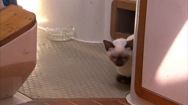 a tonkinese cat crouches in a cozy corner of its owner's boat. - 隠れる点の映像素材/bロール