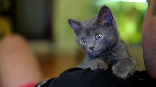 too cute kitten looking television show - gray color stock videos and b-roll footage