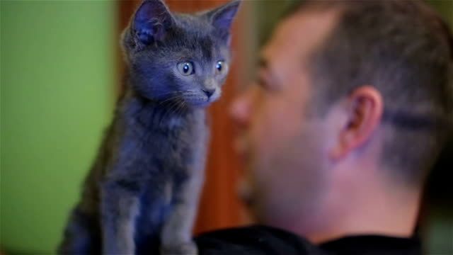 Too cute kitten looking Television show
