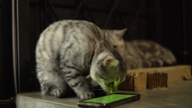 too cute kitten plays with mobile phone - gray color stock videos & royalty-free footage