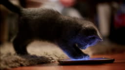 Too cute kitten plays with mobile phone
