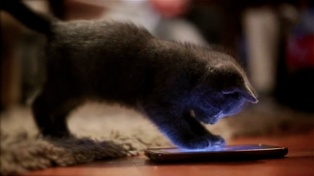 too cute kitten plays with mobile phone - animal themes stock videos & royalty-free footage