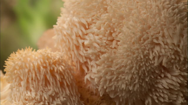 tooth fungi - toadstool stock videos and b-roll footage