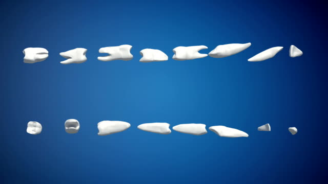 Tooth Rotation Loop