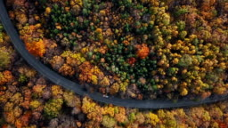 Top aerial view of country road in sunny autumn forest