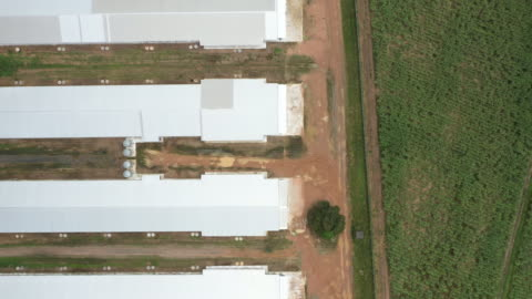 top aerial view of meat farm - barn stock videos & royalty-free footage