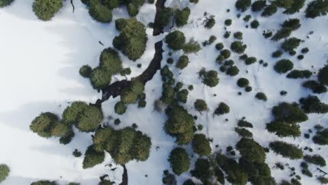 stockvideo's en b-roll-footage met top down antenne van de sneeuw tussen bomen - wyoming