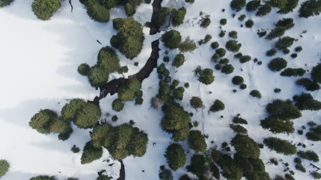 top down aerial of snow between trees - jackson hole stock-videos und b-roll-filmmaterial