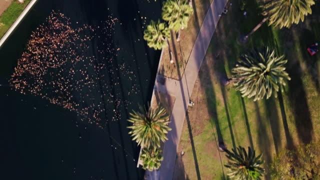 Top Down Aerial Shot of Echo Park Lake, Los Angeles