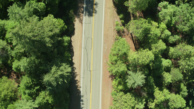 vidéos et rushes de top down aerial shot of road in forest in northern california top down aerial shot of road in forest in northern california top down aerial shot of road in forest in northern california top down - étendue sauvage état sauvage
