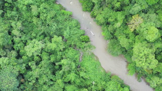 vídeos de stock, filmes e b-roll de top down aerial view borneo rainforest with river. - árvore tropical