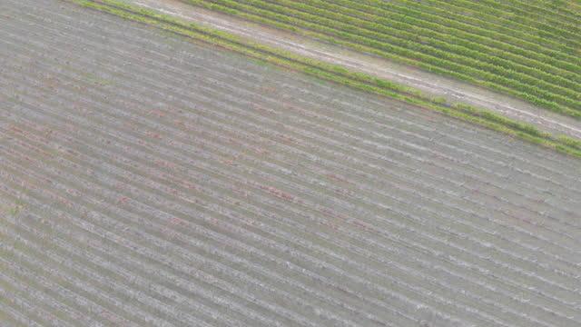 top down aerial view of vineyard its to reveal vast fields of winery, barossa valley - south australia bildbanksvideor och videomaterial från bakom kulisserna