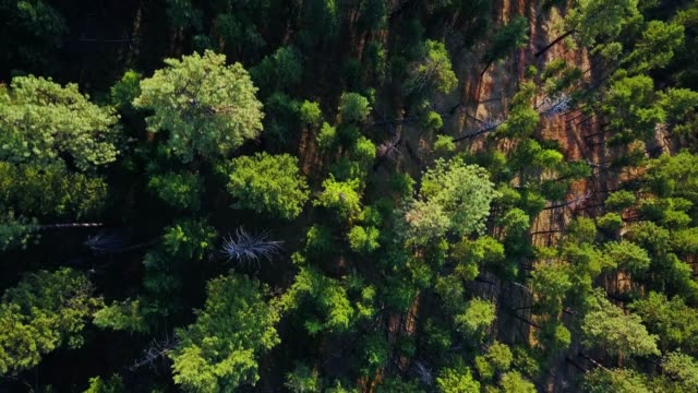 top down drone shot of evergreen forest in oregon - umatilla stock videos and b-roll footage