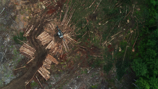top down drone shot of felled trees in logged area of forest - oregon coast stock videos & royalty-free footage