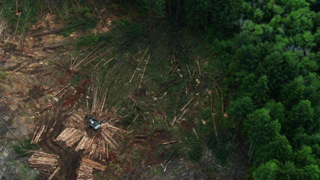 top down drone shot of felled trees in logging clear cut - forestry industry stock videos & royalty-free footage