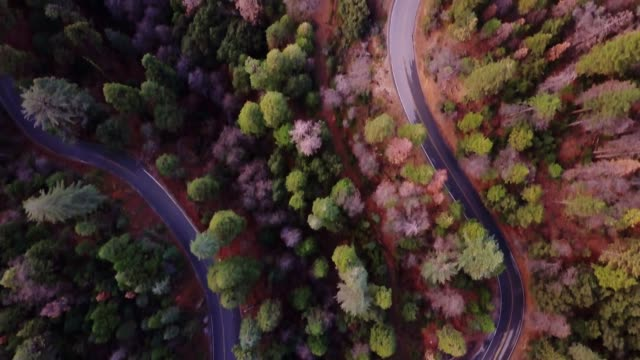 Top Down Drone Shot of Forest Crossed by Winding Road