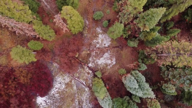 top down drone shot of forest with patchy snow - sequoia stock videos and b-roll footage