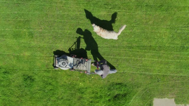top down drone shot of man cutting lawn - prato rasato video stock e b–roll