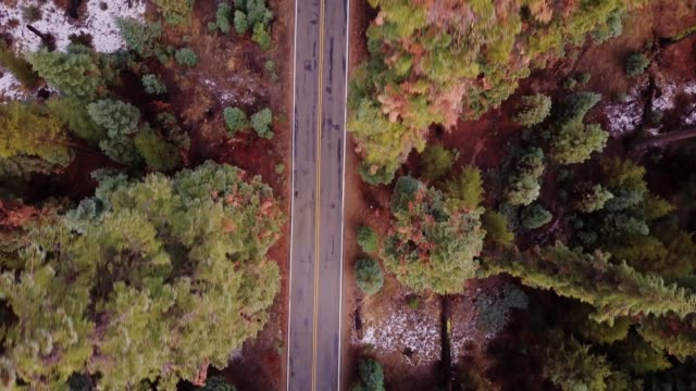 top down drone shot of road through forest - sequoia stock videos & royalty-free footage