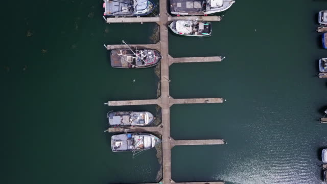 top down shot of boats in marina of westport, washington - marina stock videos & royalty-free footage