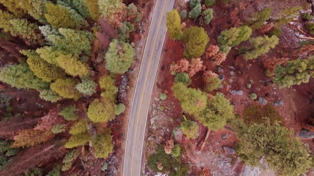 top down shot of empty road through forest - sequoia stock videos and b-roll footage