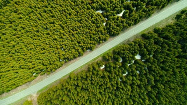 top down shot of mountain road and forest aerial view - named wilderness area stock videos & royalty-free footage