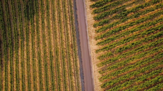 Top Down Shot of Vineyards Bisected by Road