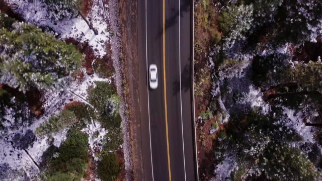 top down view of road through forest - californian sierra nevada stock videos and b-roll footage