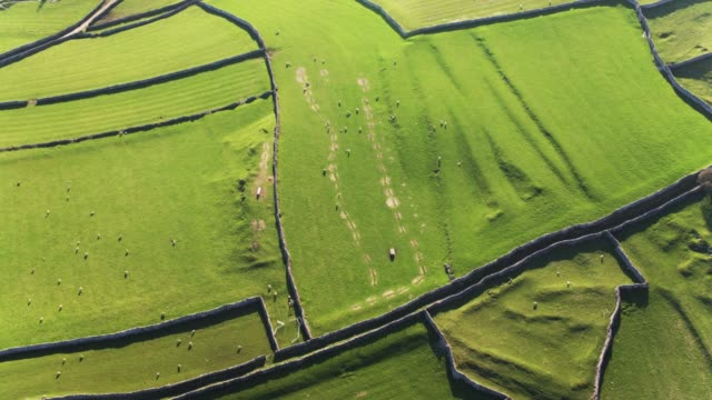 top down view of sheep fields in yorkshire dales - drone shot - rolling landscape stock videos & royalty-free footage