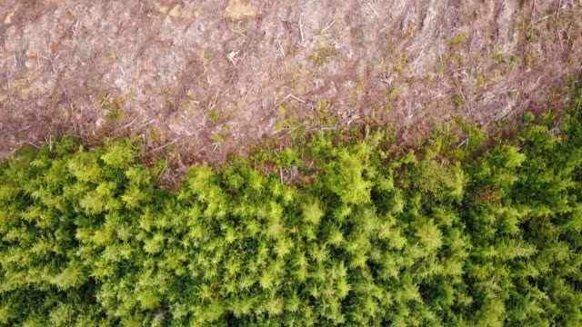 top down view of tree harvesting in managed forest - industria forestale video stock e b–roll